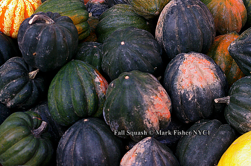 Fall Squash © Mark Fisher NYC1-0079-Recovered